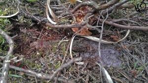 tubeweb atypus cartierheide hapert site